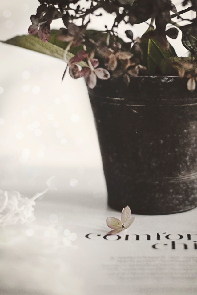 FlowerTuesday1